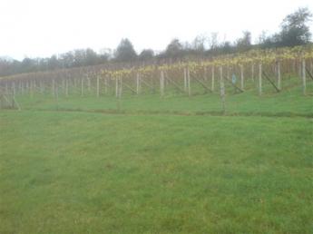 Lily Farm Vineyard in December 2011